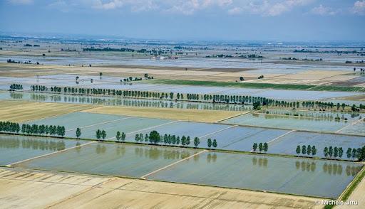 Presunta truffa del riso bio: tutti assolti gli imputati